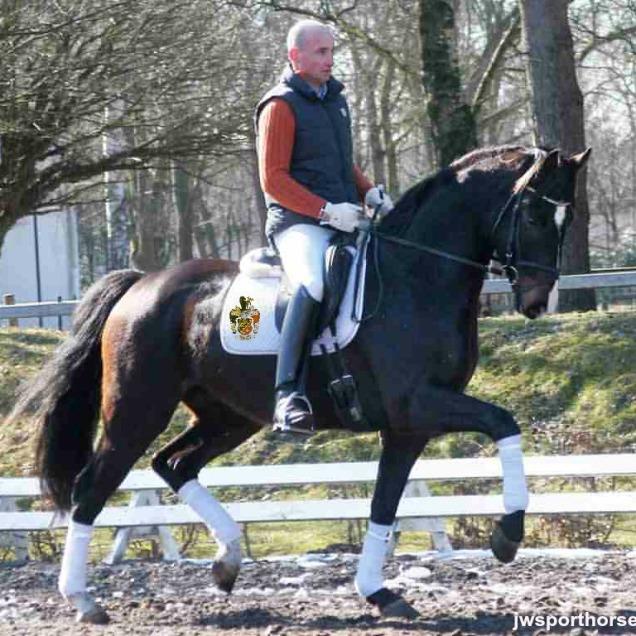 Felix de Luxe with rider